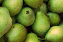 Fruites i verdures de tardor